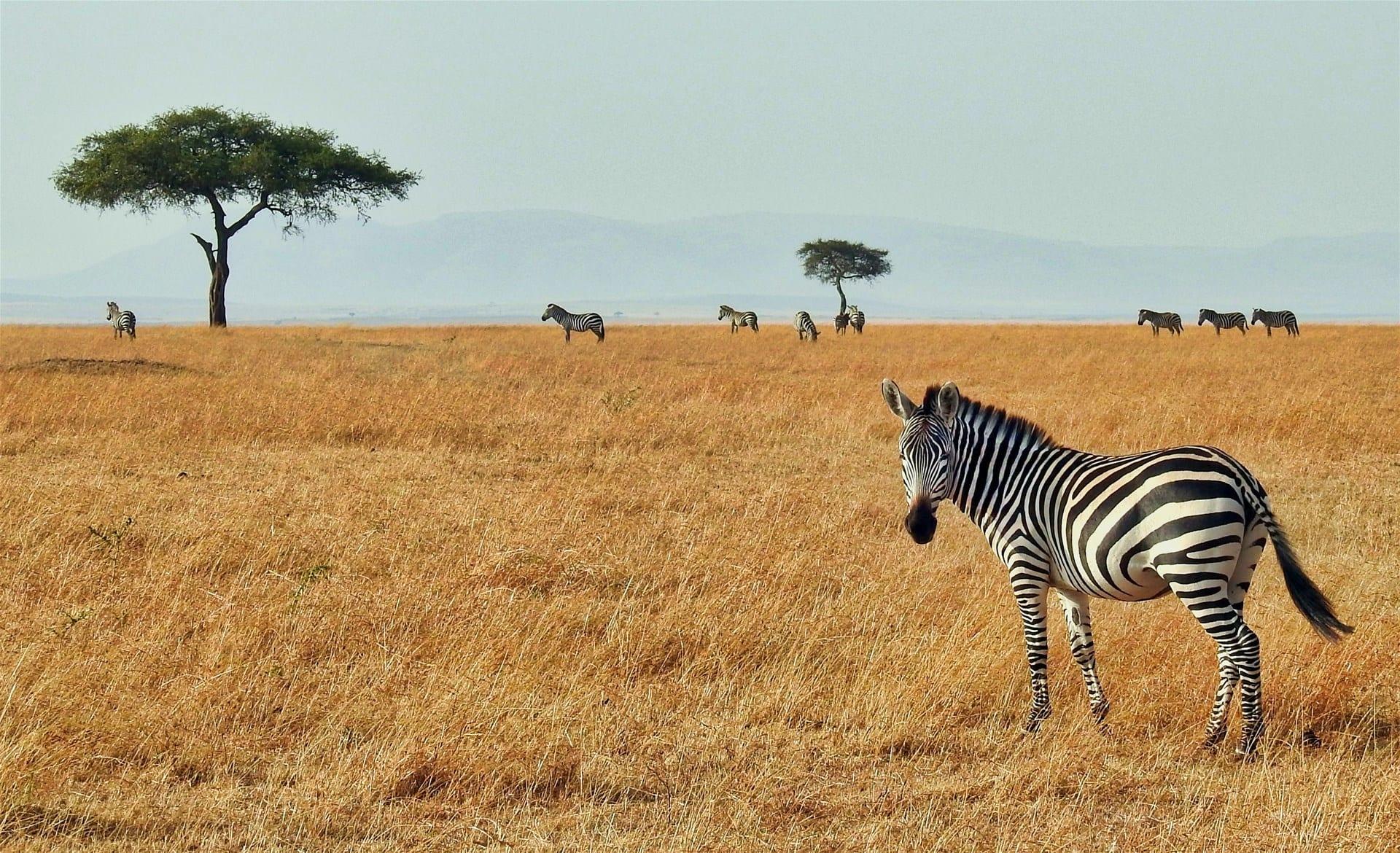 Снимки от Почивка в Кения – 7 нощувки Аll Inclusive