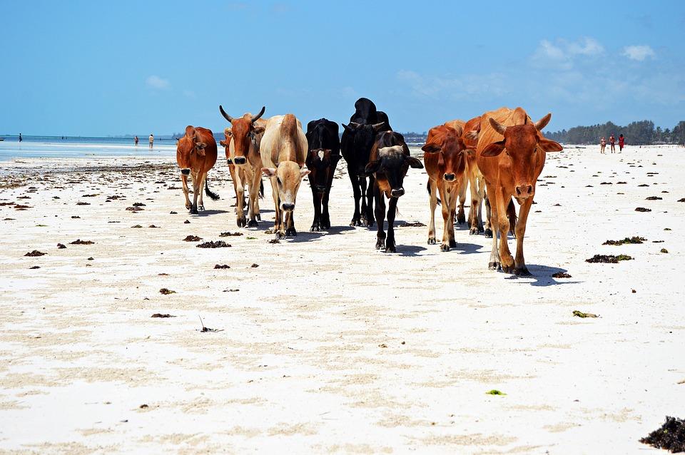 Снимки от Екзотична почивка на остров Занзибар от 31.03.2020
