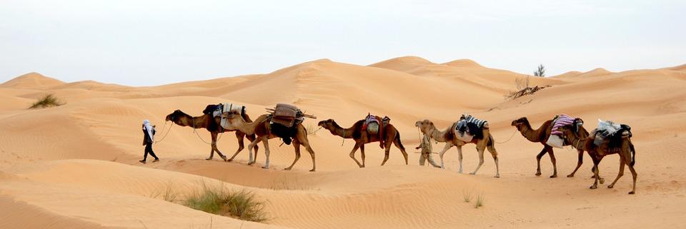 Снимки от Обиколна екскурзия в Тунис - програма за всички възрасти